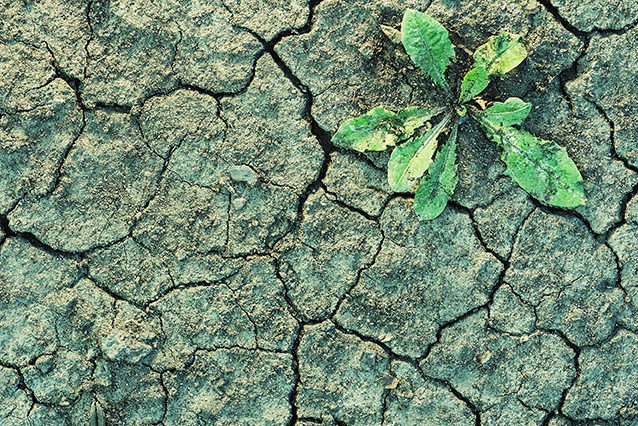 cracked earth with plant