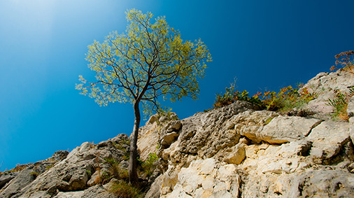 tree on rocks